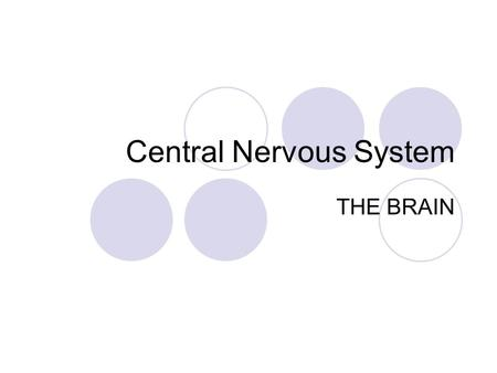 Central Nervous System THE BRAIN. Neural Tube Develops into the central nervous system in embryos.