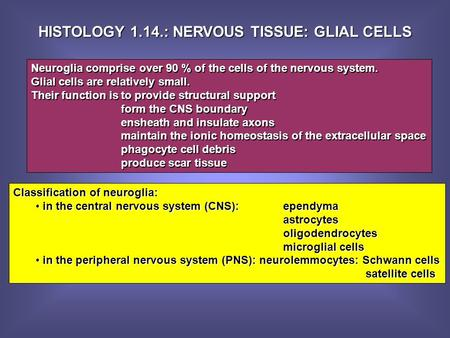 HISTOLOGY 1.14.: NERVOUS TISSUE: GLIAL CELLS Neuroglia comprise over 90 % of the cells of the nervous system. Glial cells are relatively small. Their function.