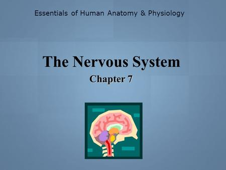Essentials of Human Anatomy & Physiology The Nervous System Chapter 7.