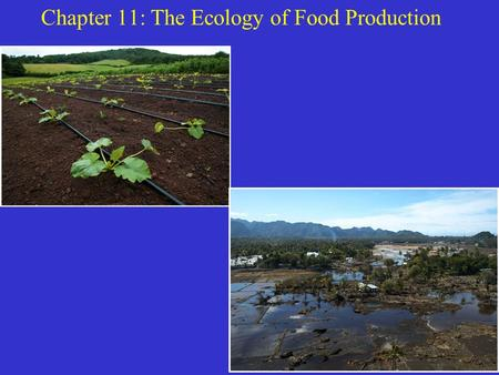 Chapter 11: The Ecology of Food Production. Can We Feed the World? To answer this we must understand how crops grow and how productive they can be. History.
