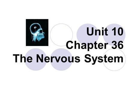 Unit 10 Chapter 36 The Nervous System