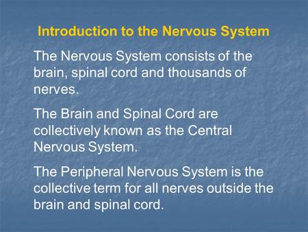 Introduction to the Nervous System The Nervous System consists of the brain, spinal cord and thousands of nerves. The Brain and Spinal Cord are collectively.