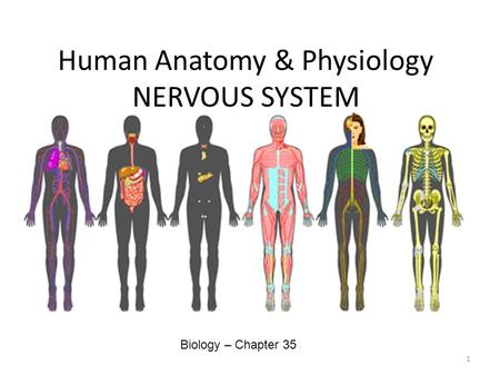Human Anatomy & Physiology NERVOUS SYSTEM Biology – Chapter 35 1.