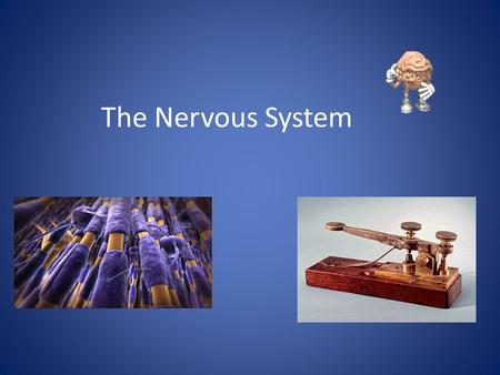The Nervous System Function of the Nervous System 1. Receives information about what is happening both inside and outside your body. 2. Directs the way.