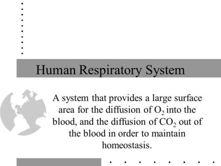 Human Respiratory System A system that provides a large surface area for the diffusion of O 2 into the blood, and the diffusion of CO 2 out of the blood.