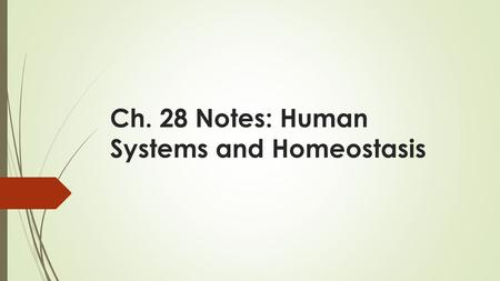 Ch. 28 Notes: Human Systems and Homeostasis. Objectives  10C analyze the levels of organization in biological systems and relate the levels to each other.