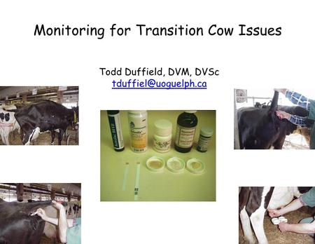 Monitoring for Transition Cow Issues Todd Duffield, DVM, DVSc