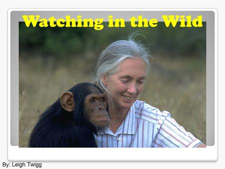 By: Leigh Twigg Watching in the Wild. The great apes are in danger of becoming extinct.