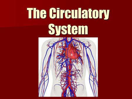 The Circulatory System. Primary Function The function of the circulatory system is to transport nutrients and oxygen (O 2 ) to cells around the body and.