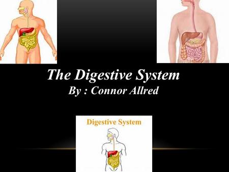 The Digestive System By : Connor Allred. F UNCTION OF THE D IGESTIVE S YSTEM There are six functions of the digestive system which are ingestion of food,