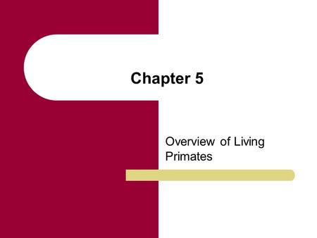 Chapter 5 Overview of Living Primates. Chapter Outline Primates as Mammals Characteristics of Primates Primate Adaptations Survey of the Living Primates.