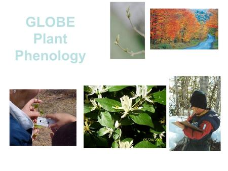 GLOBE Plant Phenology. Phenology Phenology is the study of living organisms' response to seasonal and climatic changes in their environment. Seasonal.