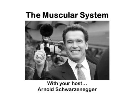 The Muscular System With your host… Arnold Schwarzenegger.