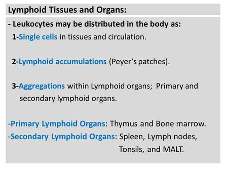 Lymphoid Tissues and Organs: - Leukocytes may be distributed in the body as: 1-Single cells in tissues and circulation. 2-Lymphoid accumulations (Peyer's.