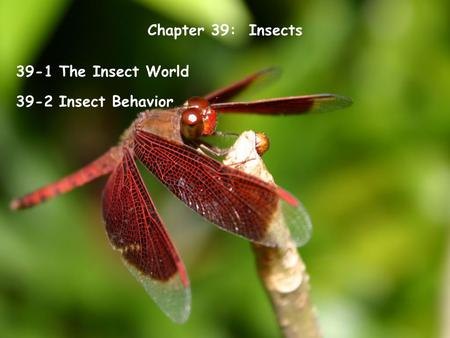 Chapter 39: Insects 39-1 The Insect World 39-2 Insect Behavior.
