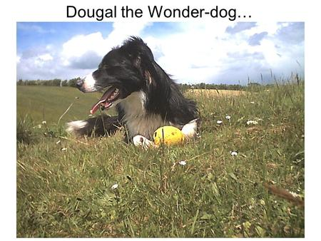 Dougal the Wonder-dog…. …with Hamish and his herd of friends explains …