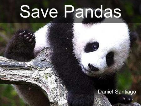 Daniel Santiago Save Pandas. GIANT PANDA The giant panda is a mammal that is classified in the bear family The panda is an endagered species from China.