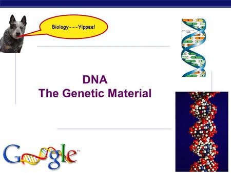 AP Biology 2008-2009 DNA The Genetic Material Biology---Yippee!