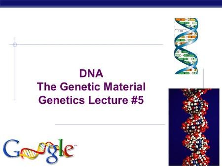AP Biology 2006-2007 DNA The Genetic Material Genetics Lecture #5.