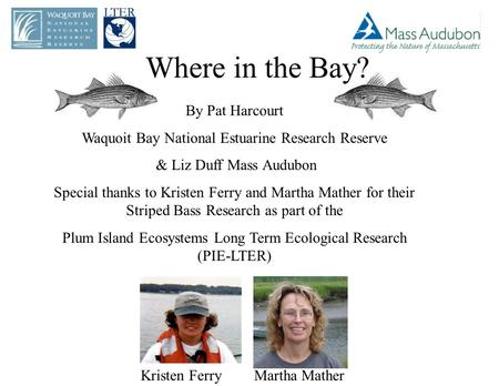 Where in the Bay? By Pat Harcourt Waquoit Bay National Estuarine Research Reserve & Liz Duff Mass Audubon Special thanks to Kristen Ferry and Martha Mather.