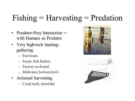 Fishing = Harvesting = Predation Predator-Prey Interaction +- with Humans as Predator Very high-tech hunting- gathering –Fast boats –Sonar, fish finders.