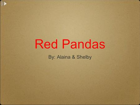 Red Pandas By: Alaina & Shelby. Their Physical Characteristics Red pandas are about 42 inches long with their long bushy tail. They usually weigh between.