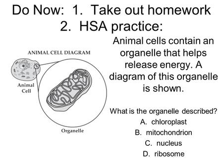 Do Now: 1. Take out homework 2. HSA practice: Animal cells contain an organelle that helps release energy. A diagram of this organelle is shown. What is.