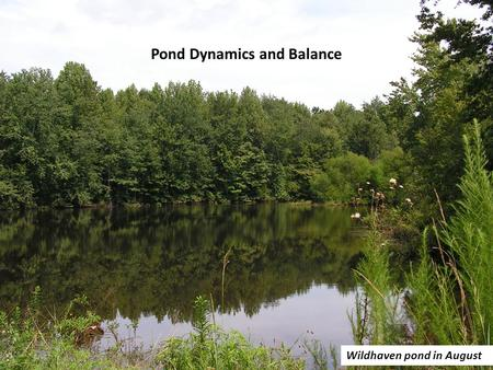 Pond Dynamics and Balance Wildhaven pond in August.