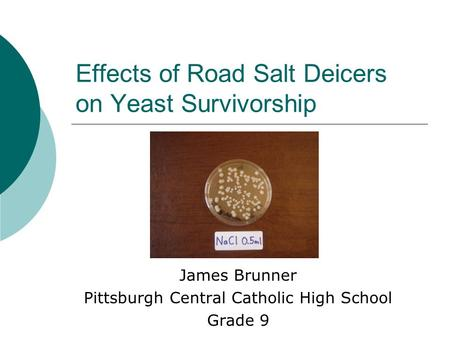 Effects of Road Salt Deicers on Yeast Survivorship James Brunner Pittsburgh Central Catholic High School Grade 9.