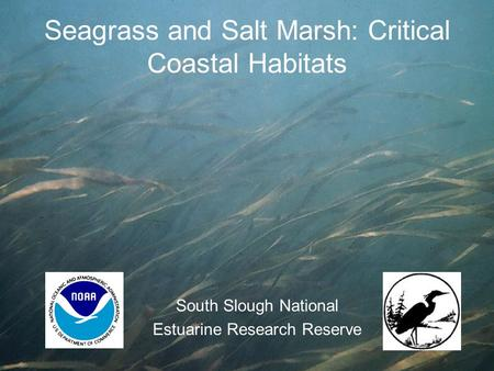 Seagrass and Salt Marsh: Critical Coastal Habitats South Slough National Estuarine Research Reserve.