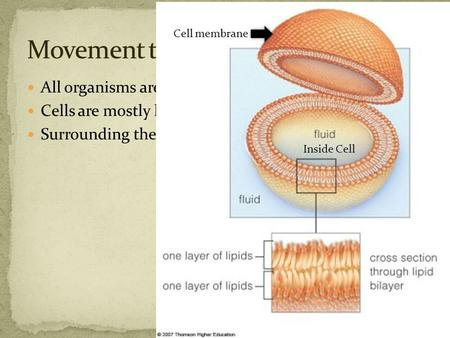 All organisms are made of cells Cells are mostly liquid. Surrounding the cells is also liquid. Inside Cell Cell membrane.