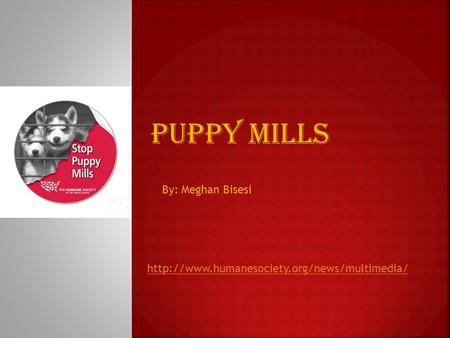 Puppy Mills By: Meghan Bisesi