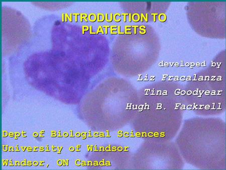 INTRODUCTION TO PLATELETS developed by developed by Liz Fracalanza Liz Fracalanza Tina Goodyear Tina Goodyear Hugh B. Fackrell Hugh B. Fackrell Dept of.