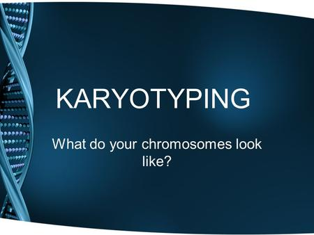 KARYOTYPING What do your chromosomes look like?. Karyotype Cell treated with chemical to stop in metaphase Chromosomes stained Picture taken Enlarged.