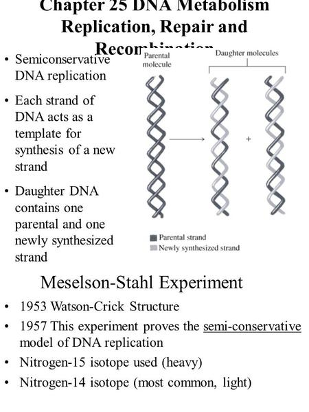 Chapter 25 DNA Metabolism Replication, Repair and Recombination Semiconservative DNA replication Each strand of DNA acts as a template for synthesis of.