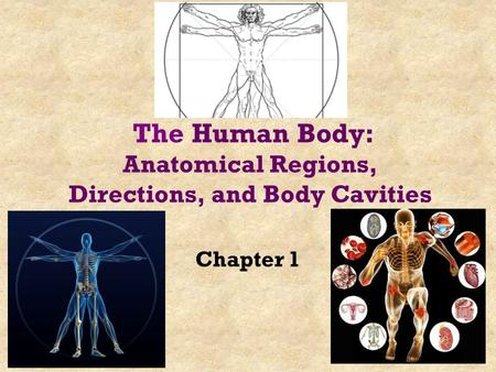 Chapter 1 The Human Body: Anatomical Regions, Directions, and Body Cavities.