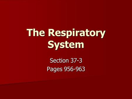The Respiratory System Section 37-3 Pages 956-963.