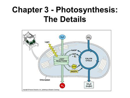 Chapter 3 - Photosynthesis: The Details. Photosynthesis Using the sun to make useful forms of energy Sunlight plays a much larger role in our sustenance.