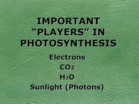 "IMPORTANT ""PLAYERS"" IN PHOTOSYNTHESIS Electrons CO 2 H 2 O Sunlight (Photons) Electrons CO 2 H2OH2O Sunlight (Photons)"