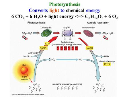 Converts light to chemical energy