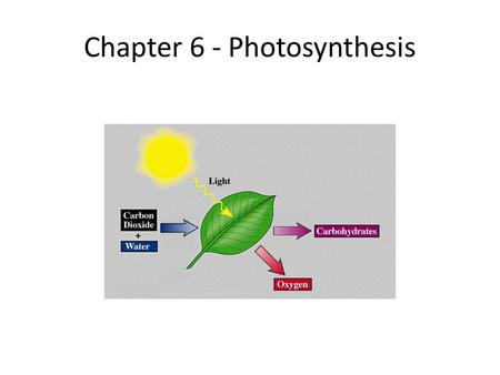 Chapter 6 - Photosynthesis. Photosynthesis Song I.Capturing the Energy in Light A. Biochemical Pathway – a series of chemical reactions in which the.