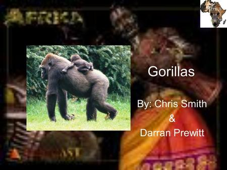 Gorillas By: Chris Smith & Darran Prewitt. Description The gorilla is a heavily built primate and is the largest of the living apes. Gorillas have a characteristic.