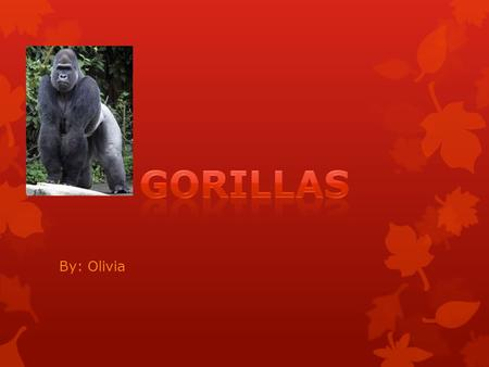 By: Olivia Mountain gorillas weigh from 200 to 400 pounds. Gorillas are extremely intelligent and can learn. The animals are peaceful, gentle, social,