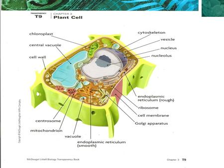 3.2 Cell Organelles. KEY CONCEPT Eukaryotic cells share many similarities.