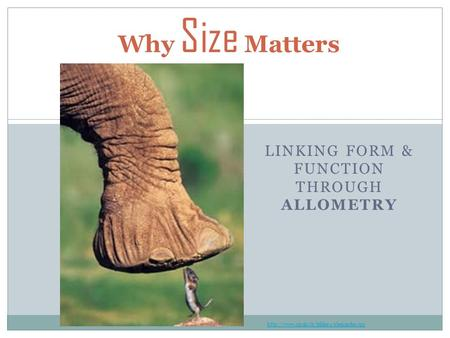 LINKING FORM & FUNCTION THROUGH ALLOMETRY Why Size Matters