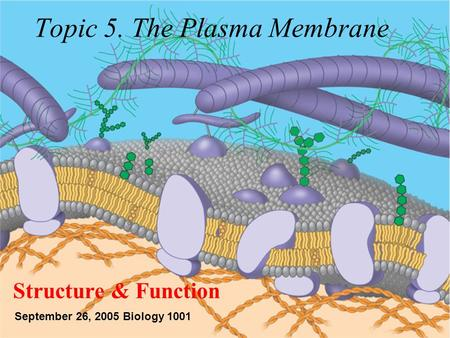 Topic 5. The Plasma Membrane Structure & Function September 26, 2005 Biology 1001.