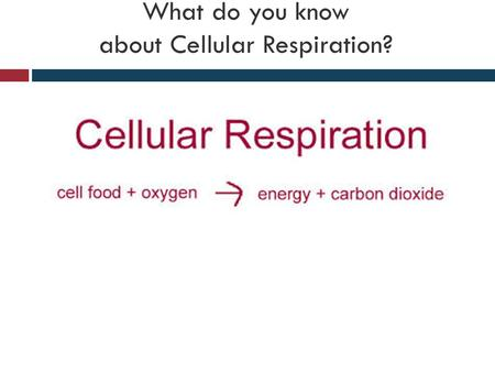What do you know about Cellular Respiration?