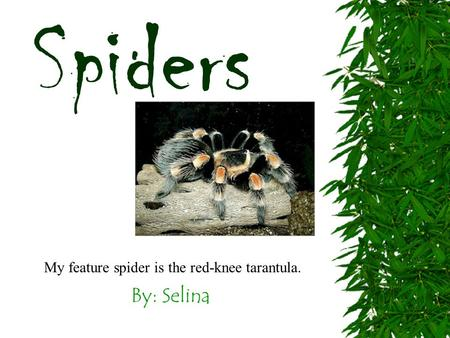 By: Selina Spiders My feature spider is the red-knee tarantula.