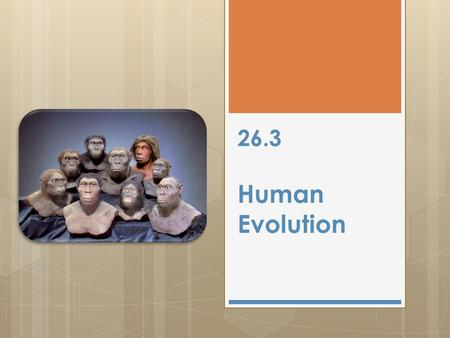 26.3 Human Evolution. Classification 26.3 Homo sapiens sapiens Kingdom Animalia Phylum Chordata Class Mammalia Order Primates Family Hominidae Genus Homo.