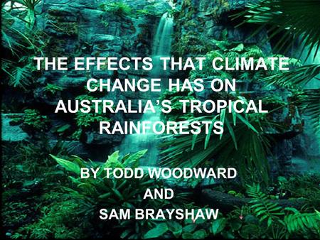 THE EFFECTS THAT CLIMATE CHANGE HAS ON AUSTRALIA'S TROPICAL RAINFORESTS BY TODD WOODWARD AND SAM BRAYSHAW.